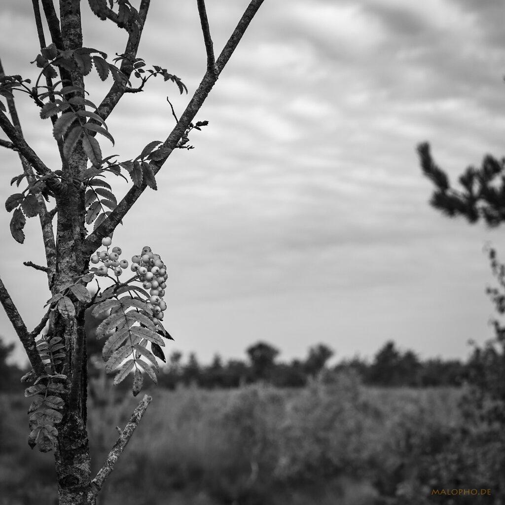 08 | 14 - Moorfrüchte