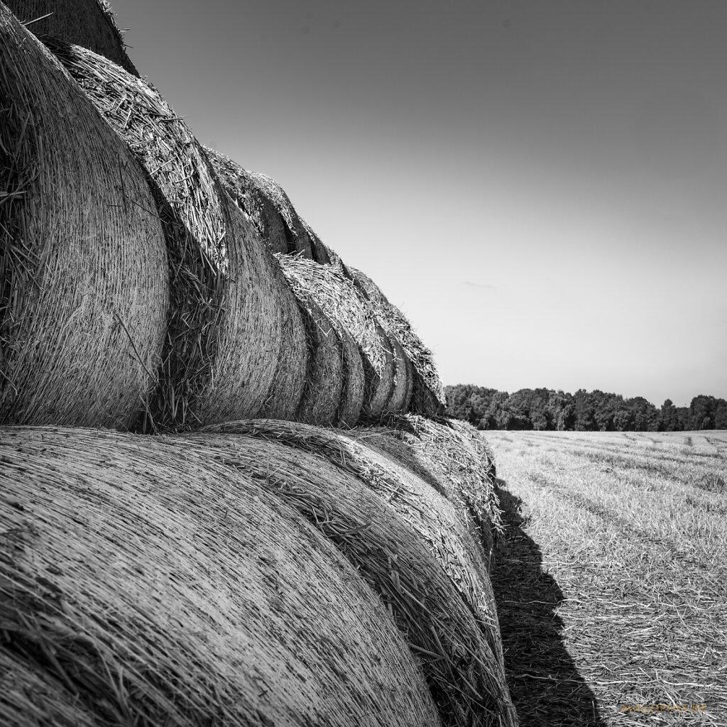 08 | 31 - Strukturen Landwirtschaft